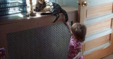 Screaming Child In 3...2...1... - Cat humor