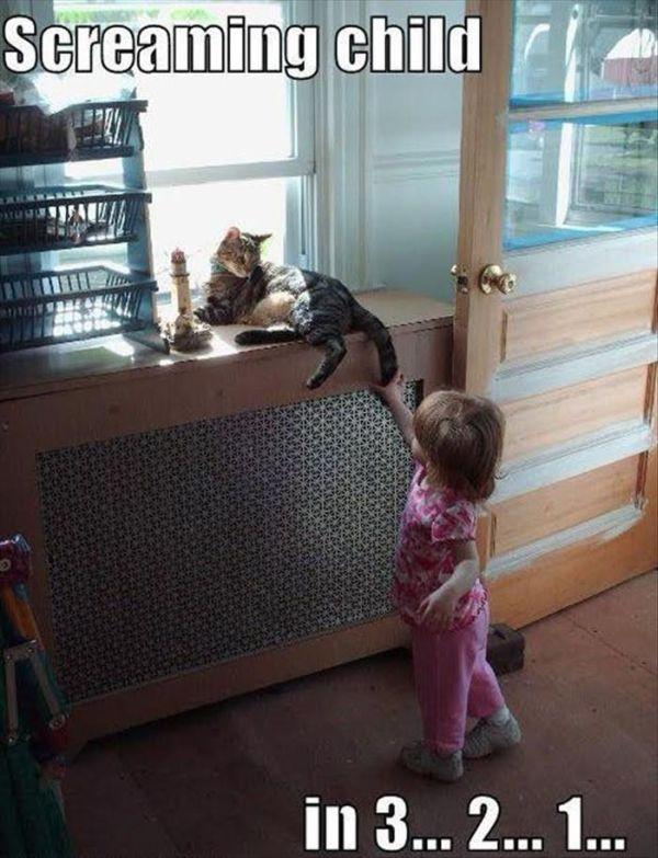 Screaming Child In 3...2...1... - Cat humor