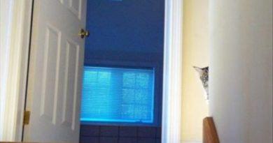 Secret Agent - Cat humor