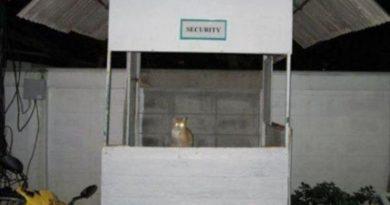 Security Cat - Cat humor