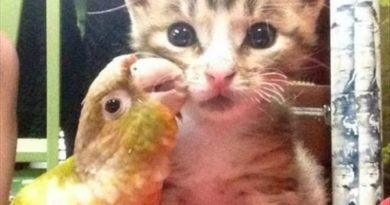 Selfie With My Girlfriend - Cat humor