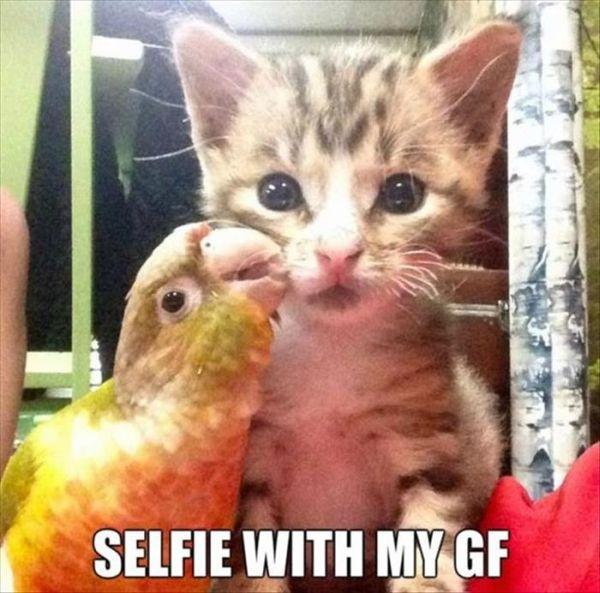Funny Selfie Meme Images : Selfie with my girlfriend cat humor