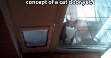 She Needs More Practice - Cat humor