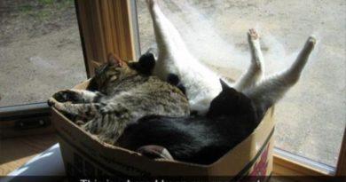 Spare Cats Box - Cat humor