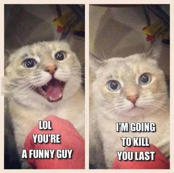 You're Funny Guy - Cat humor