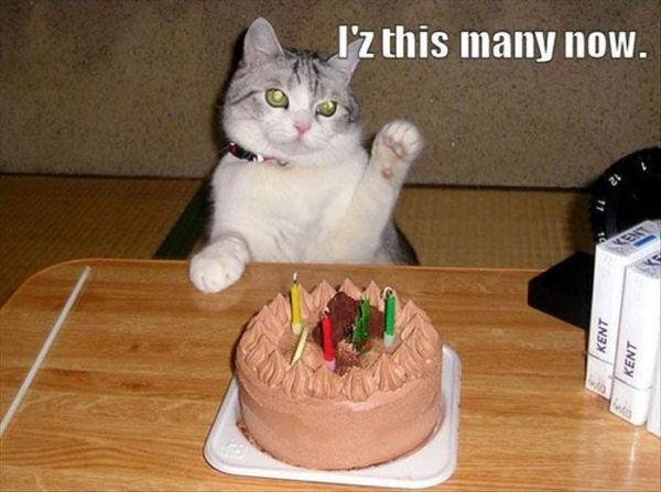 You say it's your birthday? Well, happy birthday to you! - Page 13 Cat-humor-birthday