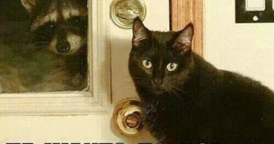 Can I Let Him In? - Cat humor