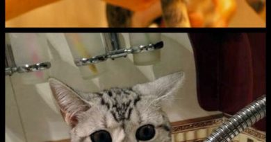 Cats Traumatized By Baths - Cat humor