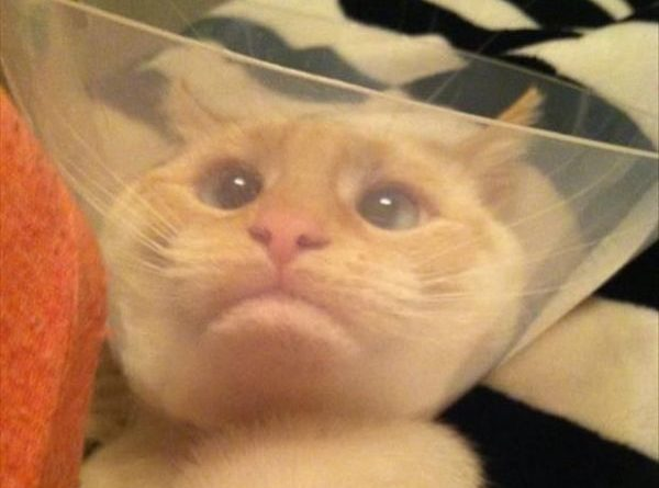 The Cone of Shame - Cat humor
