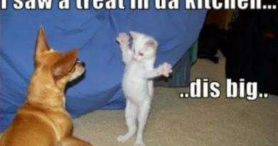 Big Treat - Cat humor