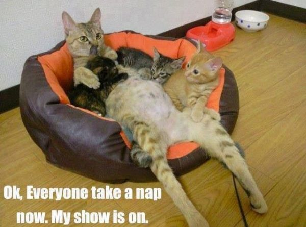 OK! Everyone Take A Nap Now - Cat humor