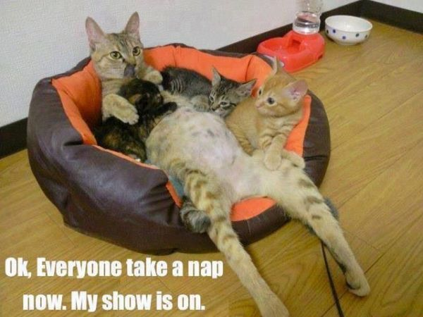OK! Everyone Take A Nap Now - Cat humor