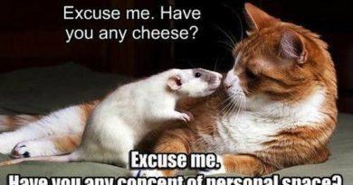 Excuse Me - Cat humor