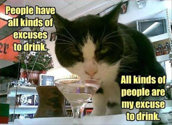 Excuses To Drink - Cat humor