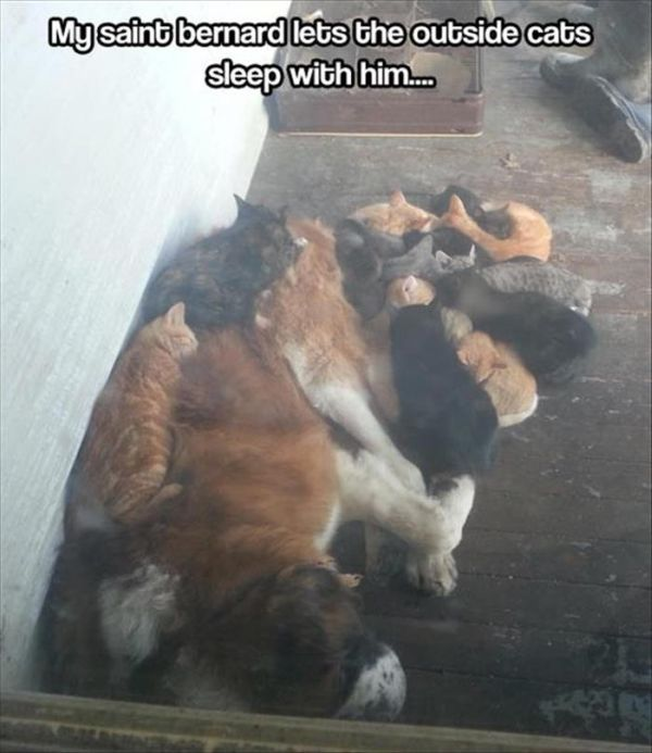Find The Dog - Cat humor