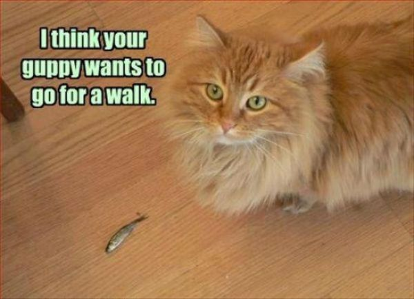 I Think Your Guppy Wants to Go To Walk - Cat humor