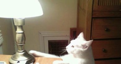 Had To Unplug The Touch Lamp - Cat humor
