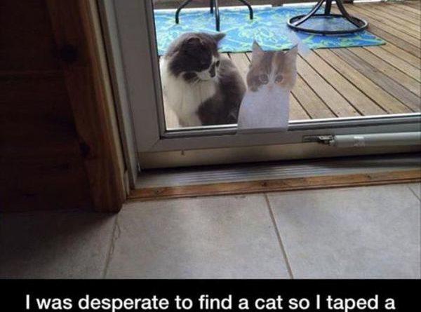 How To Find A Cat - Cat humor