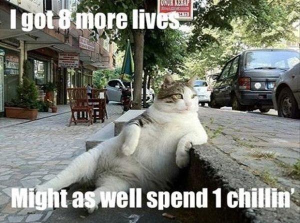 I Got 8 More Lives - Cat humor