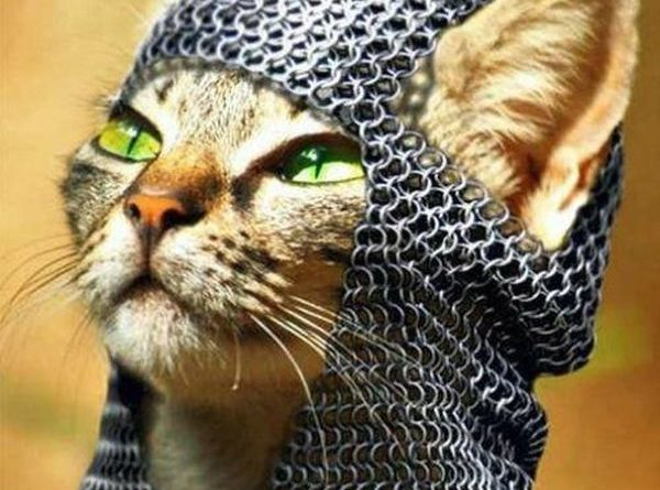 I Must Continue My Quest - Cat humor
