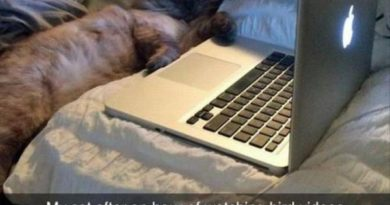 Movieholic Cat - Cat humor