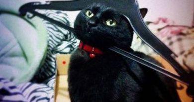 Napoleon Bonacat - Cat humor