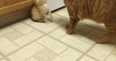New Kitty - Cat humor