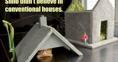 Non Conventional Cat - Cat humor
