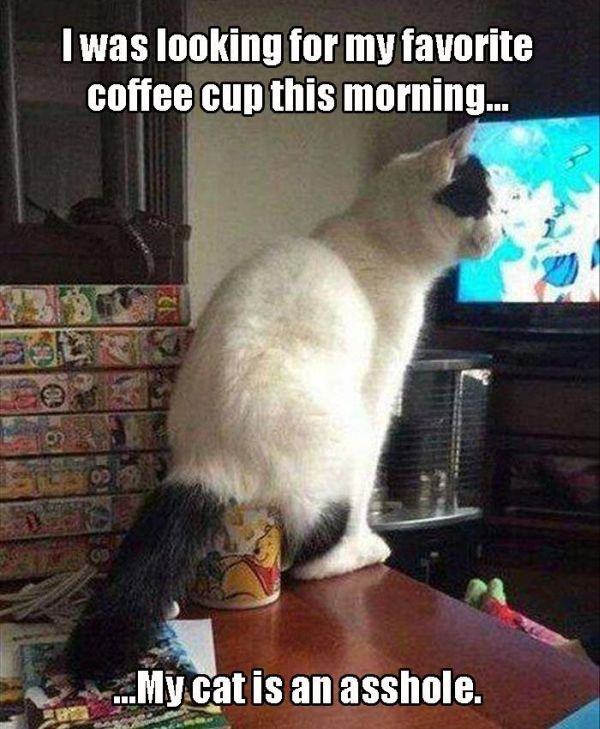 cat humor nothing says good morning like cat butt in your cup nothing says good morning like cat humor