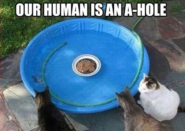 A Real A-Hole - Cat humor