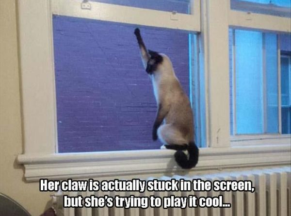 Playing It Cool - Cat humor