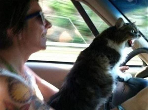 Road Rage - Cat humor