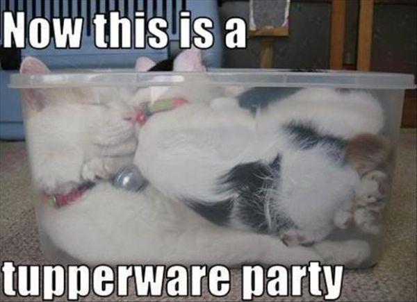 Tupperware Party - Cat humor