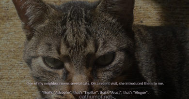 Unusual Cat Names - Cat humor