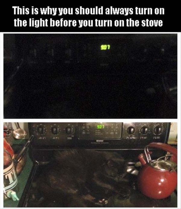 Always Turn On The Light Before Your Turn On The Stove - Cat humor