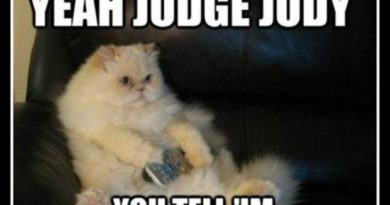Yeah Judge Judy - Cat humor