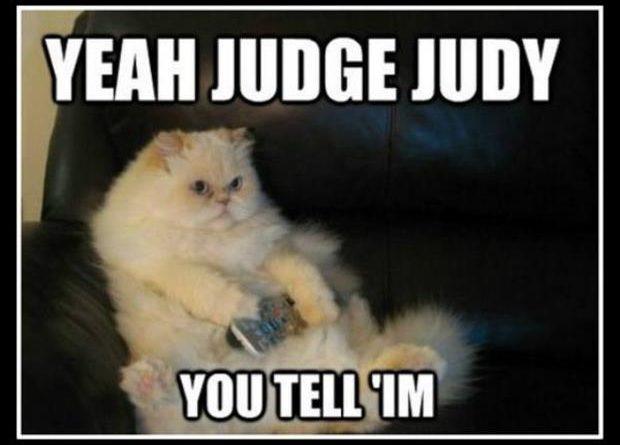 Yeah Judge Judy - Cat humor