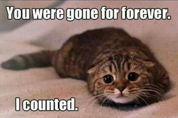 You Were Gone Forever - Cat humor