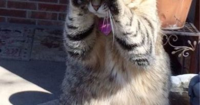 Peekaboo - Cat humor