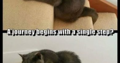A Journey Begins With A Single Step? - Cat humor