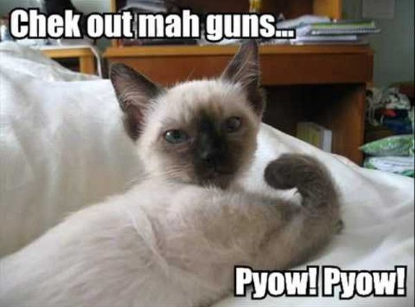 Check Out Mah Guns - Cat humor