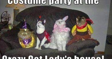 Costume Party - Cat humor