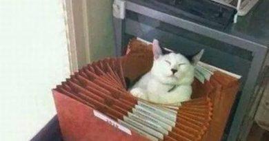Don't Ask Me - Cat humor