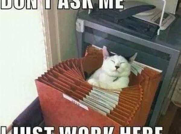 Don't Ask Me - Cat humor