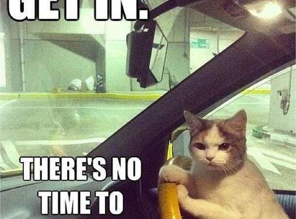 Get In! - Cat humor