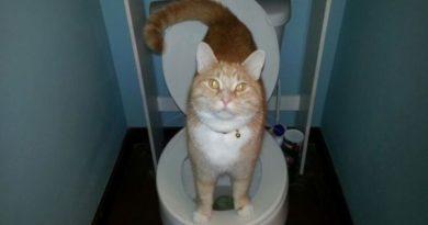 I Am Guardian - Cat humor