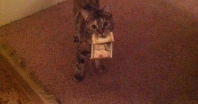 Here's 10 Bucks - Cat humor