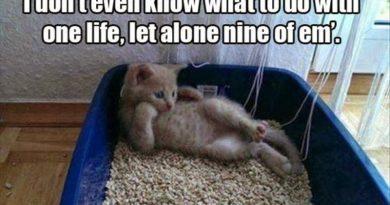 Tough Decision... - Cat humor