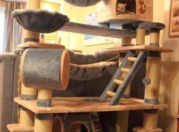 New Cat Tree - Cat humor