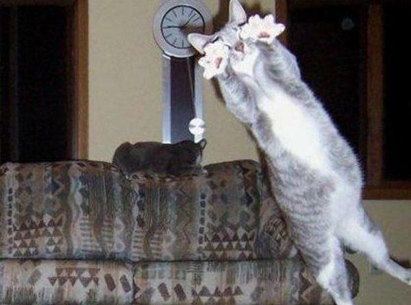 I Regret Nothing - Cat humor
